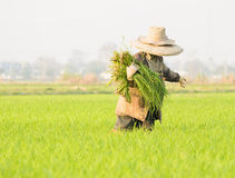 Farmer and grass Royalty Free Stock Photography