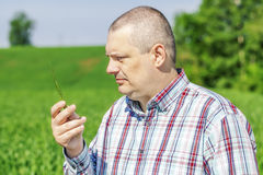 Farmer with green ears Royalty Free Stock Images