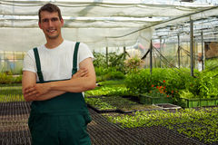 Farmer in greenhouse Stock Photos