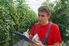 Farmer in a Greenhouse Stock Image
