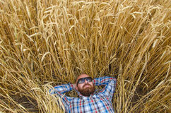 A farmer or hairless hipster lie and relax in field of wheat. Stock Image