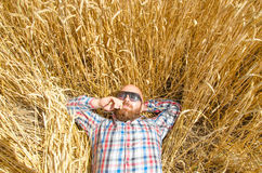 A farmer or hairless hipster lie and relax in field of wheat. Royalty Free Stock Image