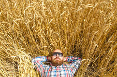 A farmer or hairless hipster lie and relax in field of wheat. Royalty Free Stock Photo