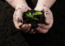 Farmer hand holding a fresh young plant Stock Image