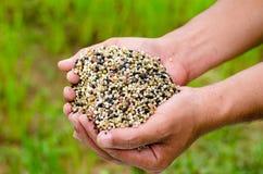 Farmer hand holding plant chemical fertilizer Royalty Free Stock Photos