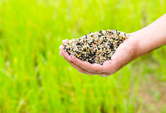 Farmer hand holding plant chemical fertilizer royalty free stock images