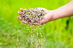 Farmer hand pouring plant chemical fertilizer. Over green background Royalty Free Stock Photo