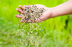 Farmer hand pouring plant chemical fertilizer royalty free stock photo