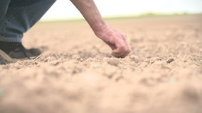 Farmer hand seeding peanut close up shoot stock video
