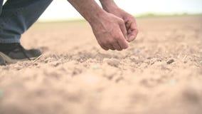 Farmer hand seeding peanut close up shoot stock footage