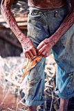 Farmer hands. Closeup old working farmer hands, twisting  cigar Royalty Free Stock Photography