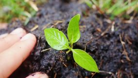 Farmer hands holding and putting back organic soil on the ground, planting, seedling over blurred green background in stock footage