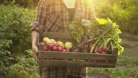 Farmer hands holding wooden box full of fresh organic vegetables, potato, carrots, tomato, beets, radish on eco farm