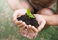 Farmer hands holding a young green tree Royalty Free Stock Images