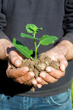 Farmer hands with plant Stock Images