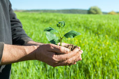 Farmer hands with plant Royalty Free Stock Images