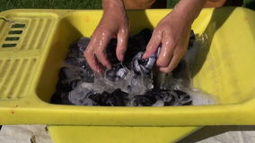 farmer hands wash clothes stock video