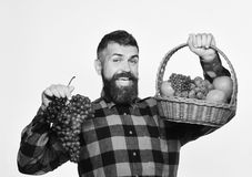 Farmer with happy face presents apples, cranberries and ripe grapes. Guy with harvest. Man with beard holds basket with royalty free stock photos