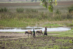Farmer in Harar, Ethiopia. HARAR, ETHIOPIA-APRIL 21, 2015: Unidentified farmer and child use donkeys to move goods through lush farmland near Harar, Ethiopia Royalty Free Stock Photo