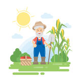 Farmer with harvest. Green landscape with corn and basket with vegetables. Old man with grey hair and beard Royalty Free Stock Photography