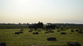 Farmer harvest hay bale Royalty Free Stock Photo