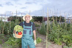 Farmer with harvest Stock Images