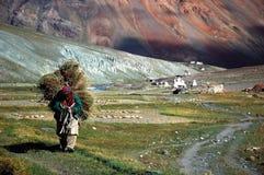 Farmer in harvest season. Ladakh, India Stock Image