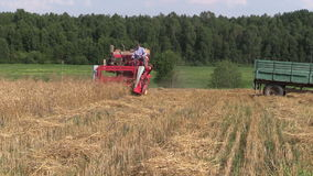 Farmer harvest wheat plant with red combine in agriculture field stock footage