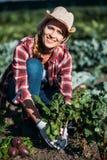 Farmer harvesting beets Stock Photo