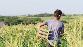 Farmer harvesting corn at field of organic eco farm. stock video footage