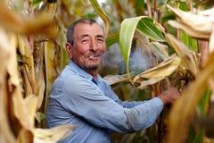 Farmer harvesting corn and smoking Stock Photo