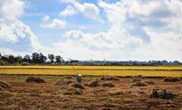 Farmer harvesting Royalty Free Stock Image