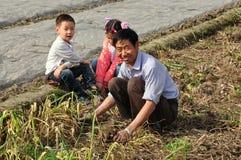 Pengzhou, China: Farmer & Children Harvesting Garlic Royalty Free Stock Image