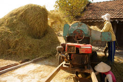 Farmer harvesting paddy grain by threshing machine Stock Photos