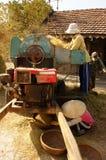 Farmer harvesting paddy grain by threshing machine Royalty Free Stock Image