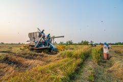 Farmer harvesting rice with harvest car. BANGKOK, THAILAND - MARCH 1 : Unidentified farmer harvesting rice in paddy field with harvest car on March 1, 2014 in royalty free stock photo