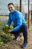 Farmer harvesting spinach Stock Image