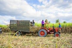 Farmer harvesting of sugarcane field Royalty Free Stock Photography