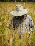 A farmer harvesting Stock Photos