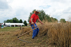 Farmer harvesting wheat with scythe