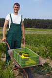 Farmer harvesting zucchini Royalty Free Stock Photo
