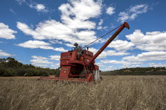 A farmer harvests a broadacre paddock of wheat. Stock Images