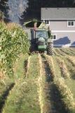 Farmer Harvests Corn Stock Image