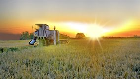 Farmer harvests the crop at sunset stock video