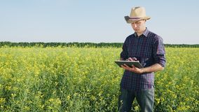 A young farmer uses a digital tablet. Farmer in a hat working on the rapse field. It uses a digital tablet stock footage