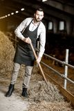 Farmer with hay in the stable. Handsome farmer in apron working with hay in the stable at the goat farm royalty free stock images