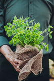 Farmer with herbs Stock Image