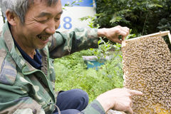 Farmer and his bees. A bee farmer is showing his working honey bees in honey comb,smiling Stock Image