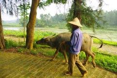 Farmer and his buffalo Stock Images