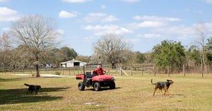 Farmer & His Dogs Stock Photo